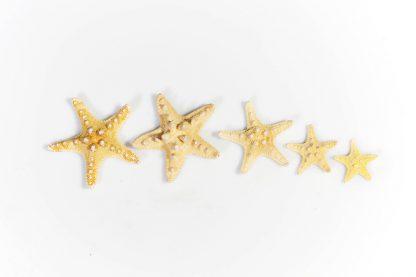 αστεριας HXB-2-0